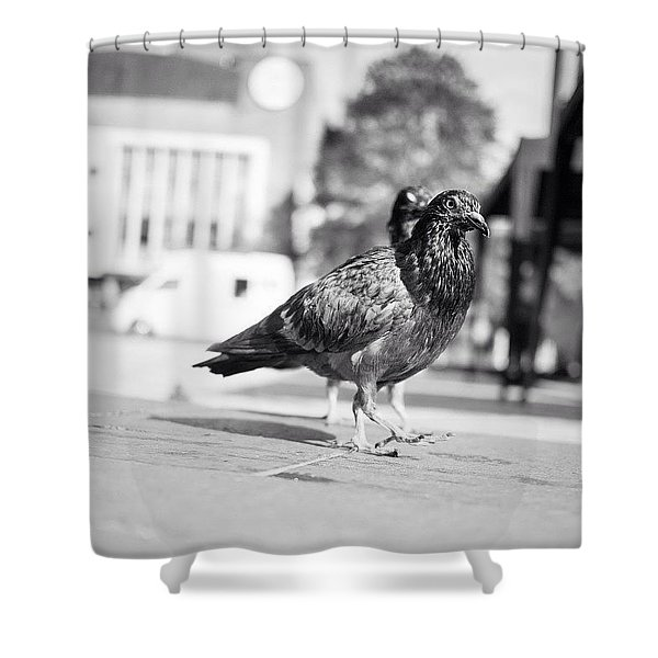 The Dove March (goose Step) Shower Curtain
