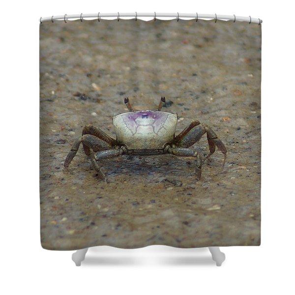 The Fiddler Crab On Hilton Head Island Shower Curtain