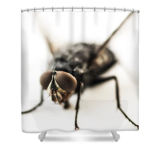 The Fly Shower Curtain