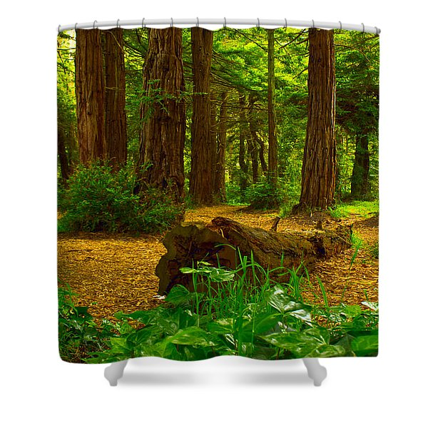 The Forest Of Golden Gate Park Shower Curtain