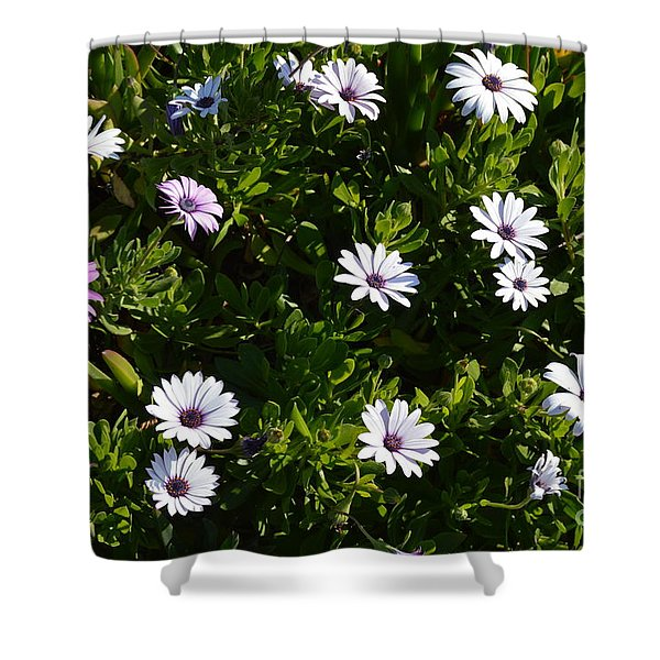 Shower Curtain featuring the photograph The Garden by Laurie Lundquist