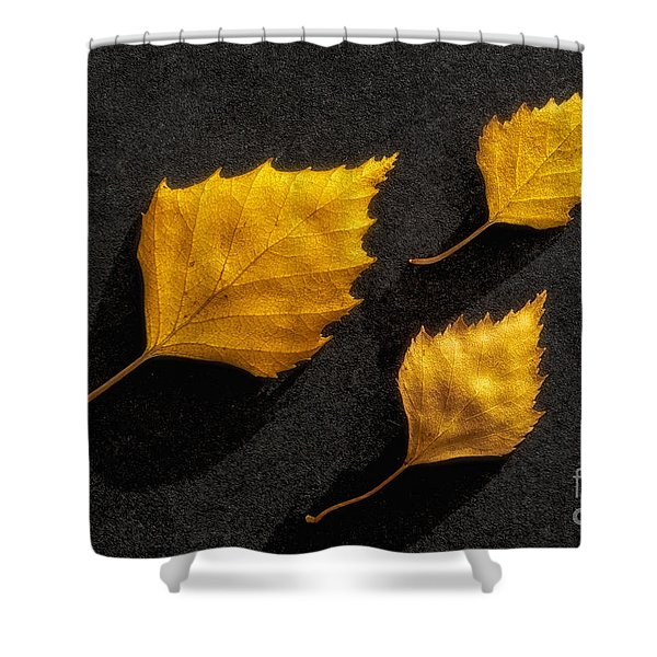 The Golden Leaves Shower Curtain