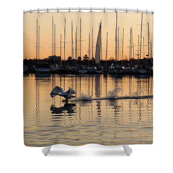 The Golden Takeoff - Swan Sunset And Yachts At A Marina In Toronto Canada Shower Curtain