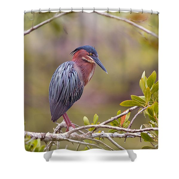 The Green Heron At Blue Hole Shower Curtain