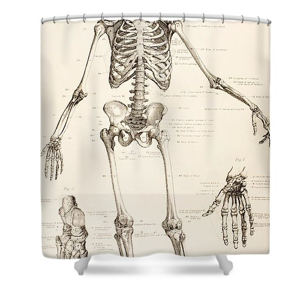The Human Skeleton Shower Curtain