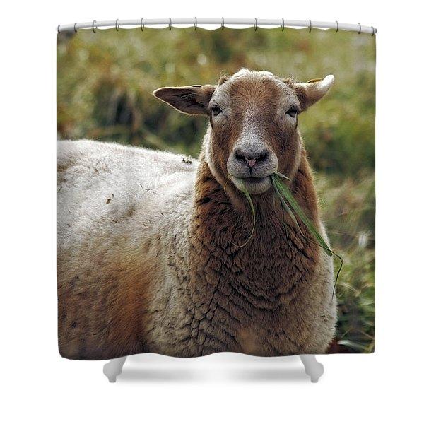 Feed My Sheep Shower Curtain