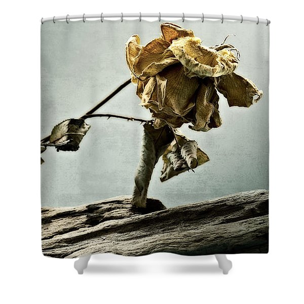 The Last Yellow Rose Of Summer Shower Curtain
