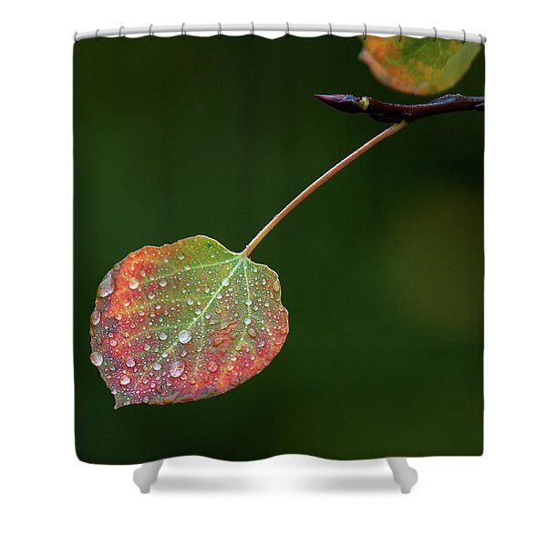 The Latter Rain  Shower Curtain