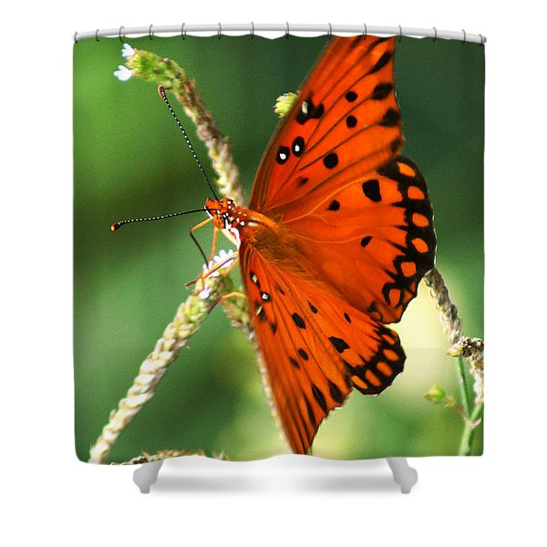 The Passion Butterfly Shower Curtain