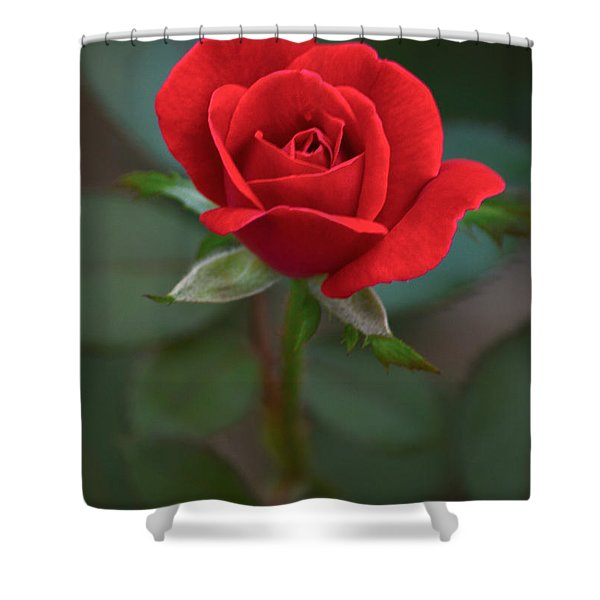 The Perfect Rose Shower Curtain