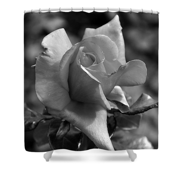 The Rose In Black And White Shower Curtain