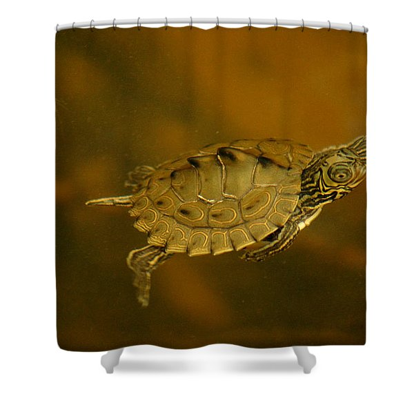 The Southeastern Map Turtle Shower Curtain