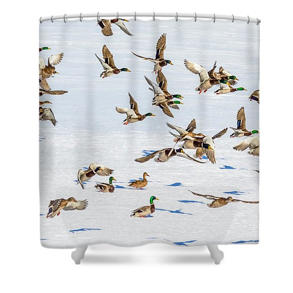 The Takeoff Shower Curtain