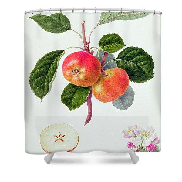 The Trumpington Apple Shower Curtain