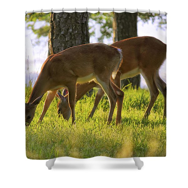 The Whitetail Deer Of Mt. Nebo - Arkansas Shower Curtain