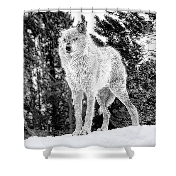 The Wolf  Shower Curtain