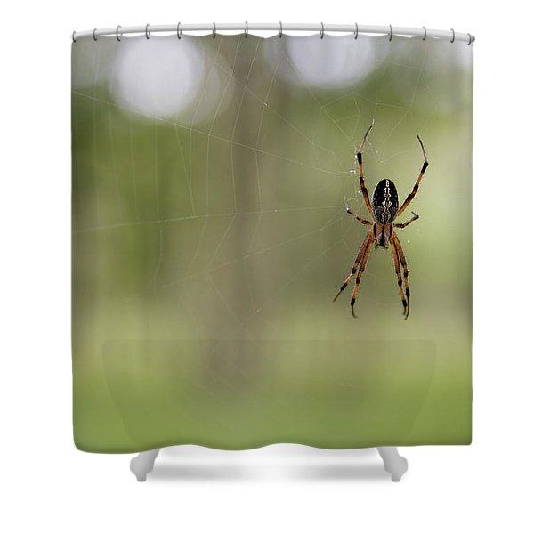 The Zig-zag Spider, An Araneid Neoscona Shower Curtain