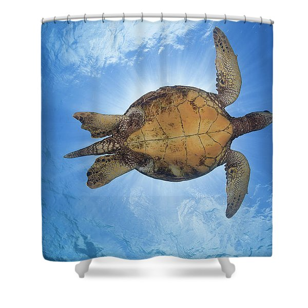 This Male Green Sea Turtle  Chelonia Shower Curtain