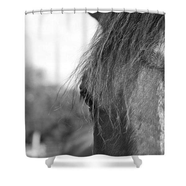 Thoroughbred B/w Shower Curtain