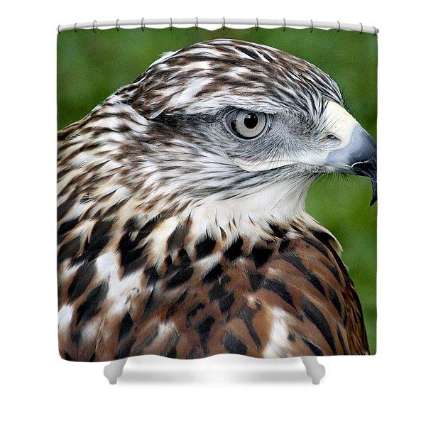 The Threat Of A Predator Hawk Shower Curtain