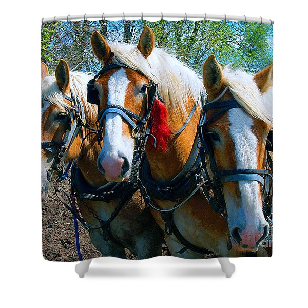 Three Horses Break Time  Shower Curtain