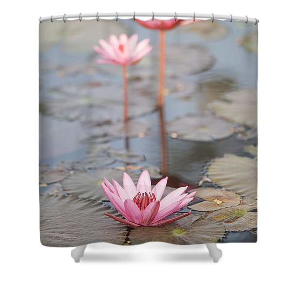 Three Lotus Flowers Shower Curtain