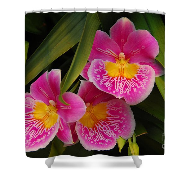 Three Pink Orchids Shower Curtain