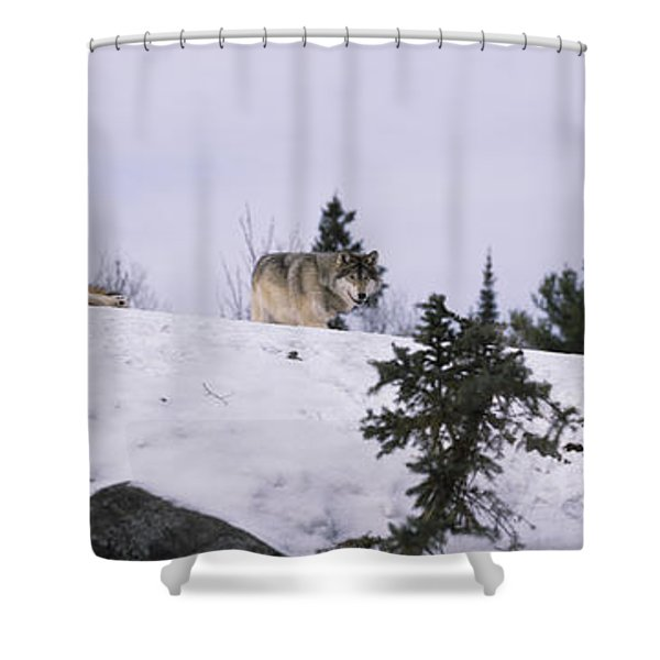 Three Wolves On A Ridge In A Forest Shower Curtain