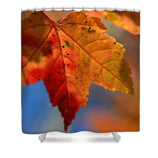 ...through The Autumn Light Shower Curtain