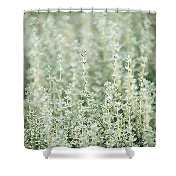 Thyme  Shower Curtain