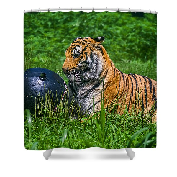 Tiger Playing With Ball Shower Curtain