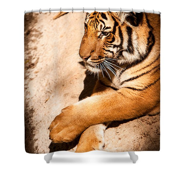 Shower Curtain featuring the photograph Tiger Resting by John Wadleigh