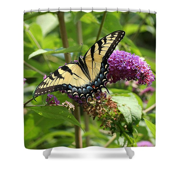 Tiger Swallowtail On Butterfly Bush Shower Curtain