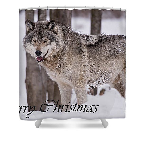 Timber Wolf Christmas Card English 3 Shower Curtain