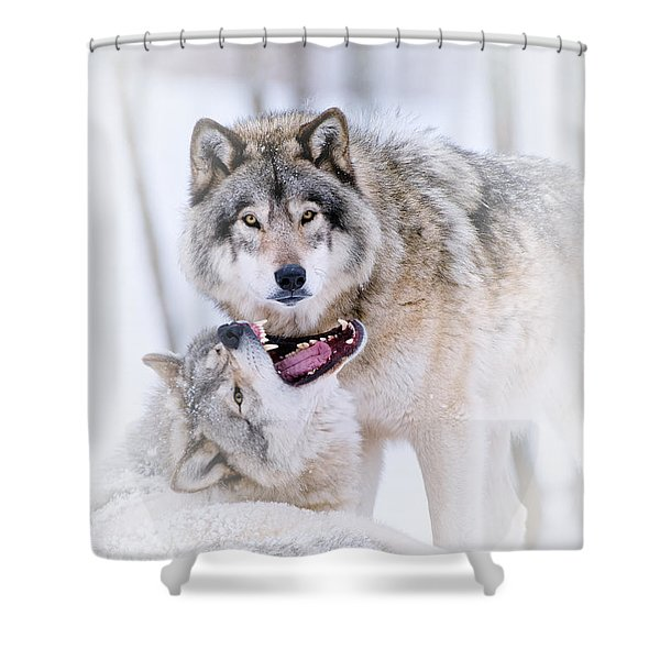 Timber Wolf Pictures 56 Shower Curtain