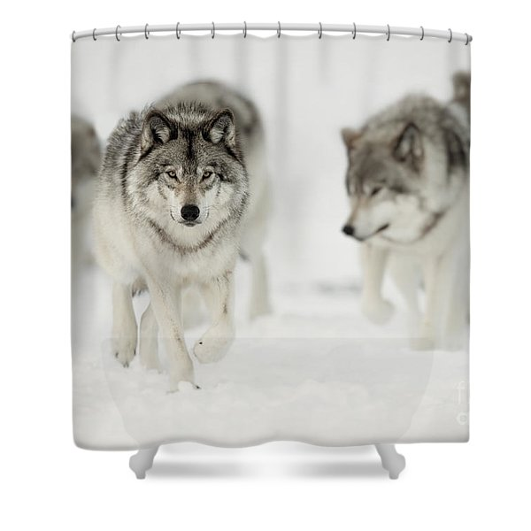 Timber Wolf Pictures 65 Shower Curtain