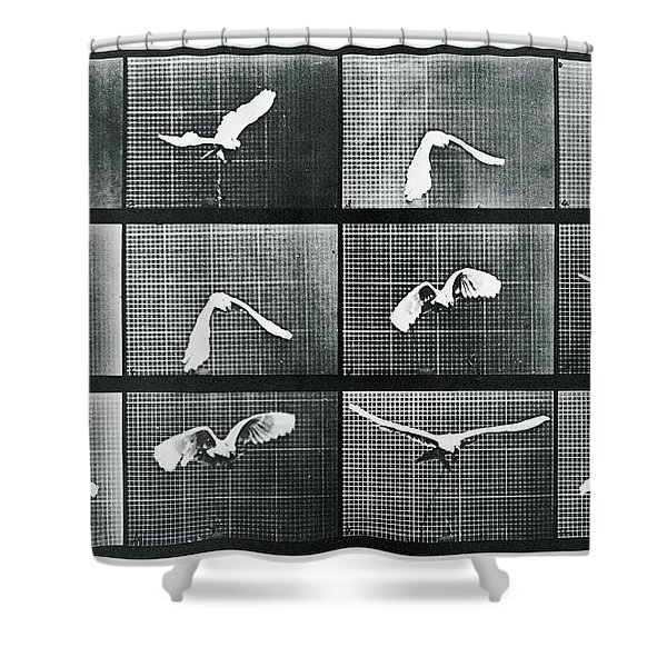 Time Lapse Motion Study Bird Monochrome  Shower Curtain