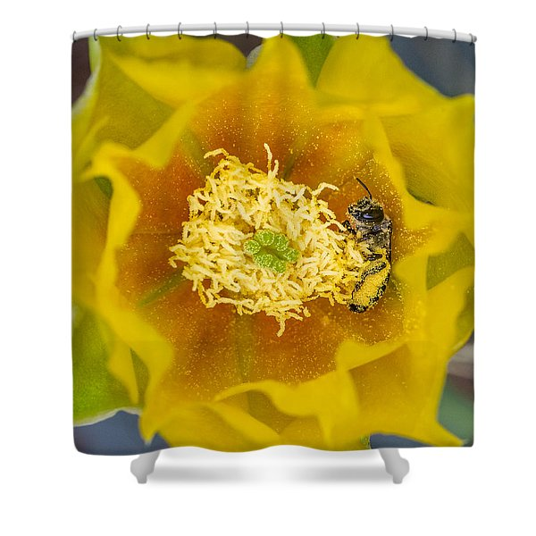 Tiny Dark Bee Covered In Prickly Pear Pollen Shower Curtain
