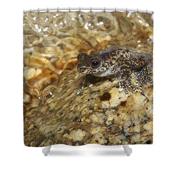 Torrent Treefrog Aka Waterfall Frog Shower Curtain
