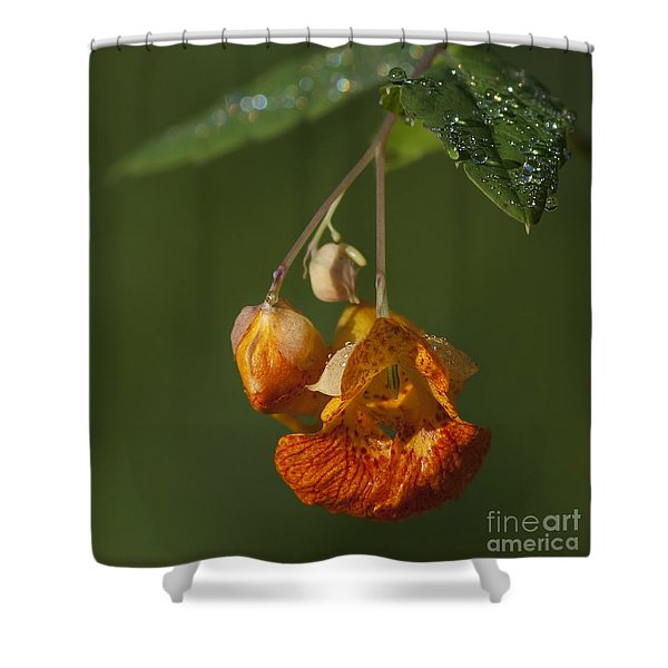 Touch Me Not.. Shower Curtain