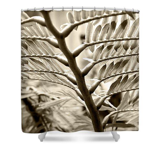 Translucidity Shower Curtain