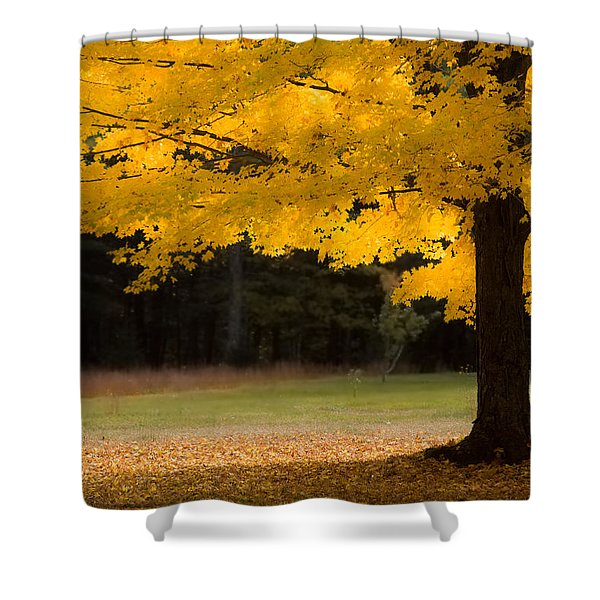 Tree Canopy Glowing In The Morning Sun Shower Curtain