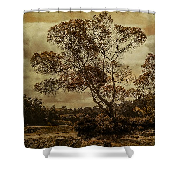 Trees And Hot Sand Shower Curtain