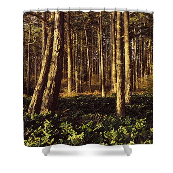 Trees And Salals In A Forest At Sunset Shower Curtain