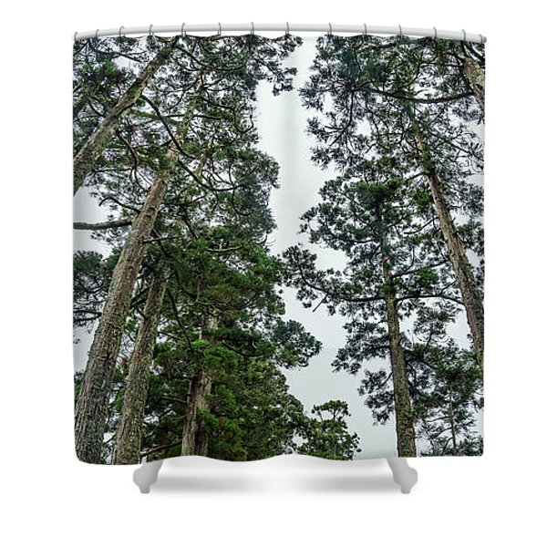 Trees Both Sides On A Path Leading Shower Curtain