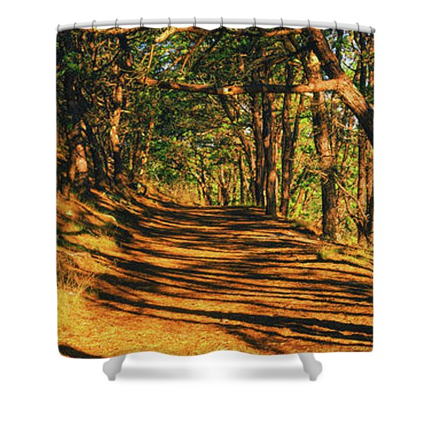 Trees In A Forest, Beech Forest Trail Shower Curtain