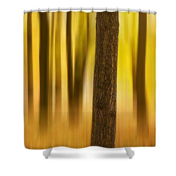 Trees In Autumn Forest Shower Curtain