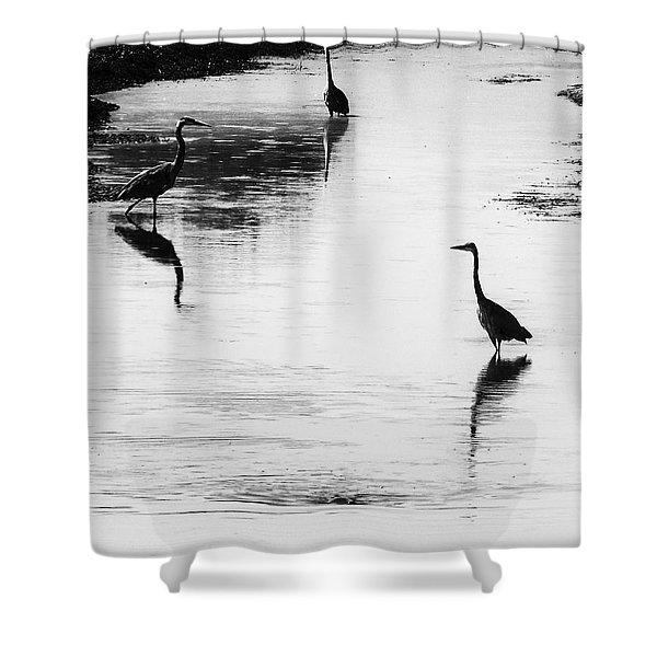 Trilogy - Black And White Shower Curtain