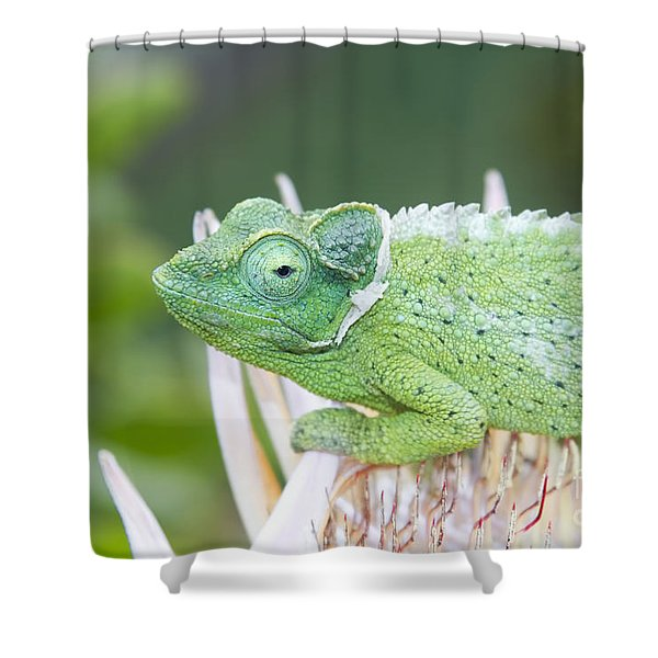 Trioceros Jacksonii - Jackson's Chameleon - Kula Maui Hawaii  Shower Curtain