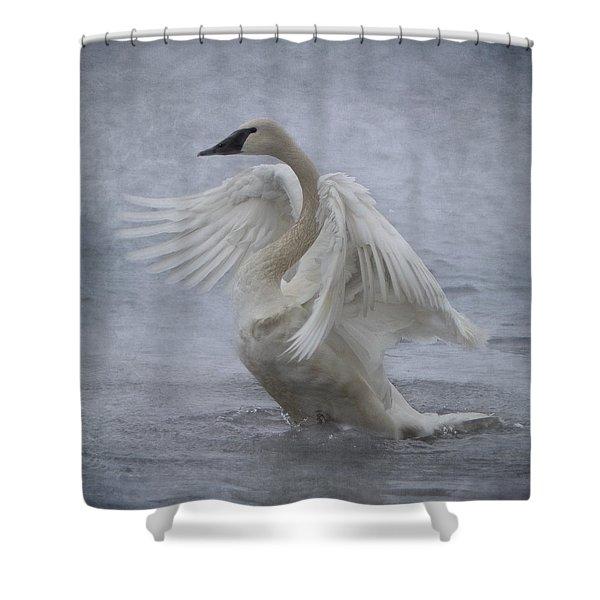 Trumpeter Swan - Misty Display Shower Curtain